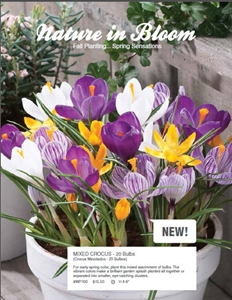 bulb-nature-in-bloom